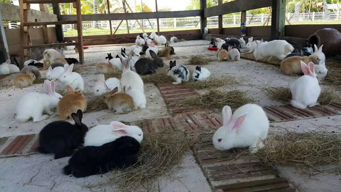 สวนกระต่าย Rabbits Garden ด่าน […]